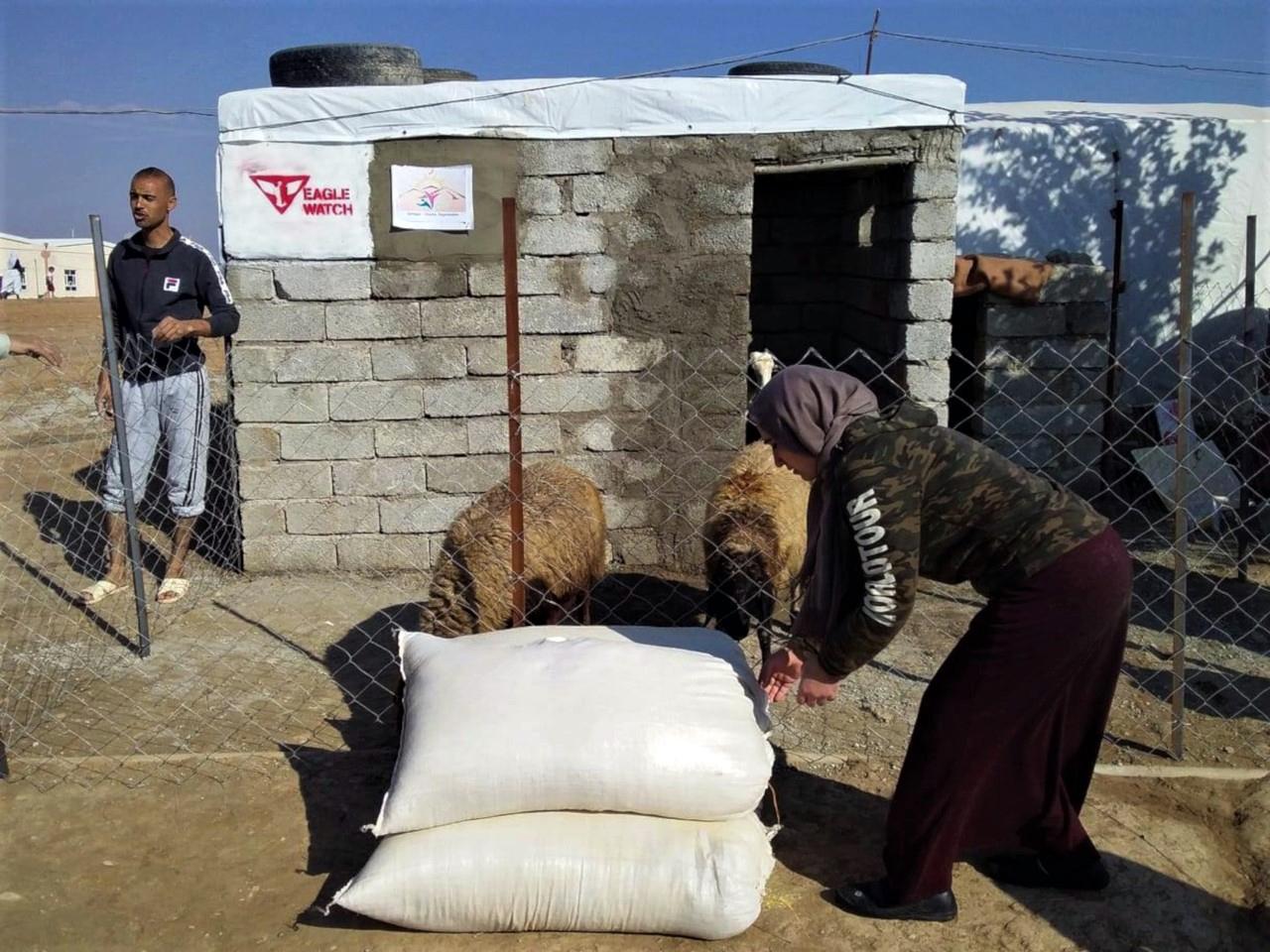 zakup trzody dla obozowych rodzin, Irak 2018.jpg